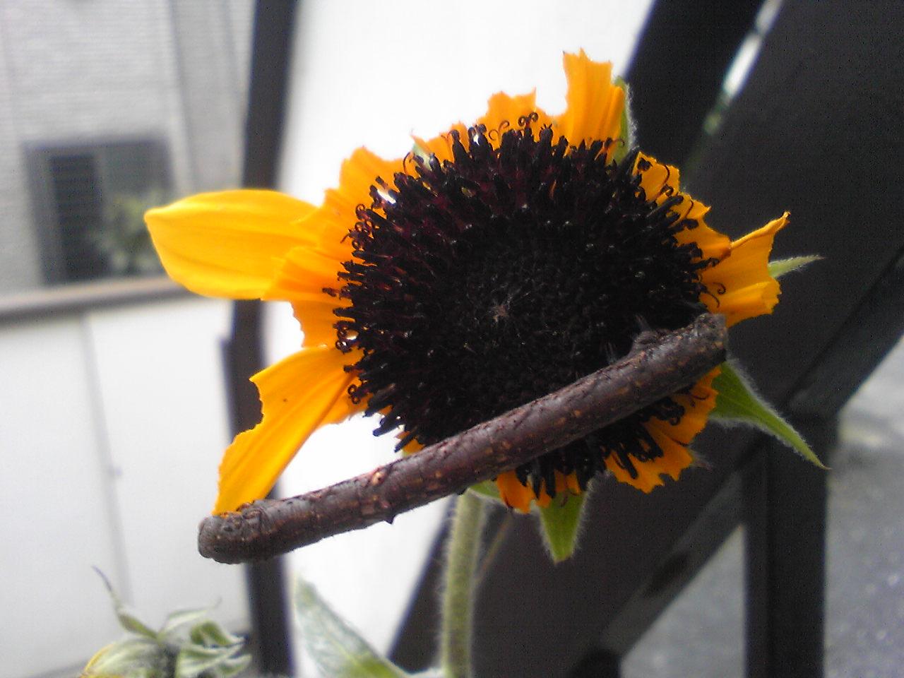 花に虫はつきもの